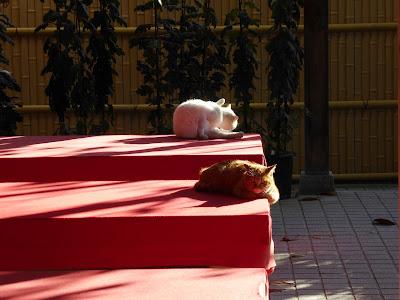 野崎観音・慈眼寺(じげんじ)の猫