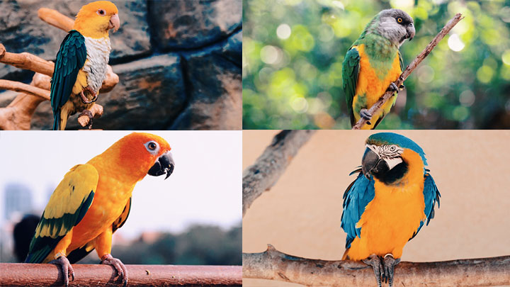 different types of parrots
