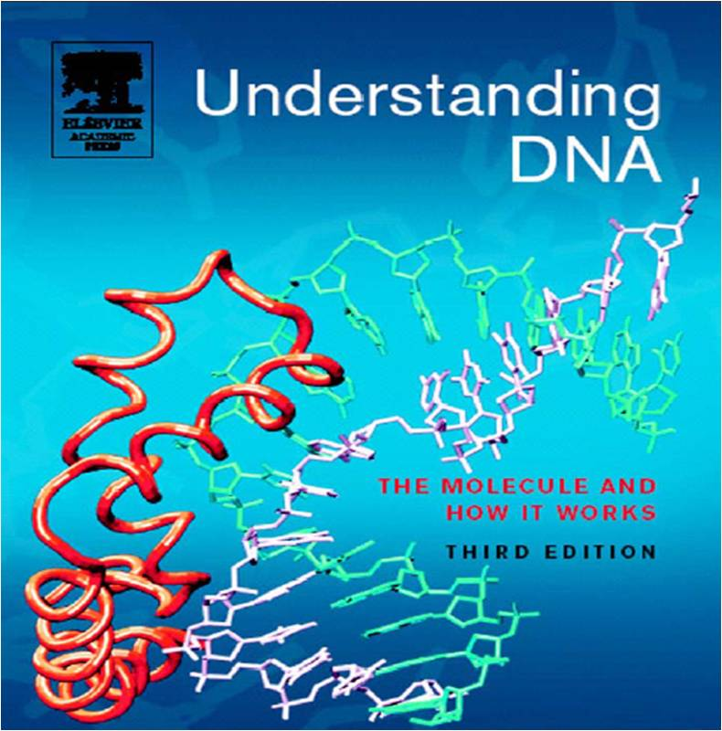 understanding the dna The structure of dna: cooperation and competition all four recognized that understanding how the parts of a dna molecule fit dna molecules—which were hard.