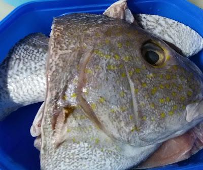 Koleksi Resepi Berasaskan Ikan Kaci Sedap Semuanya