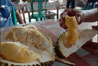 durian tembaga asli Pulau Bintan