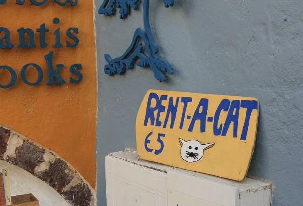 rent-a-cat
