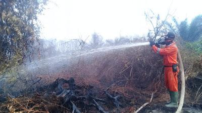 BPBD Agam Berjibaku Padamkan Lahan Gambut yang Terbakar di Durian Kapeh