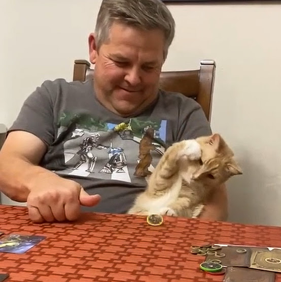 Cat prepares to pounce on spinning coin