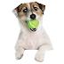 "Interesting Facts about Dog in Hindi  ""Kutta"" Jaanvar ke  Rochak Tathya"