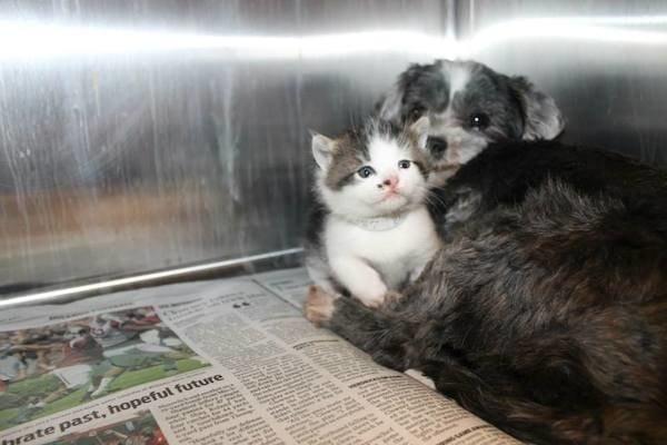 Собака кормила и защищала котенка, брошенного на дне глубокого оврага!