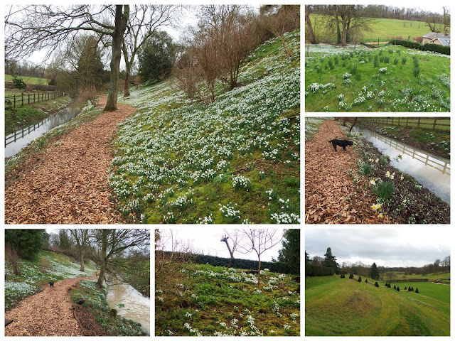 A snowdrop tour around Easton Walled Gardens