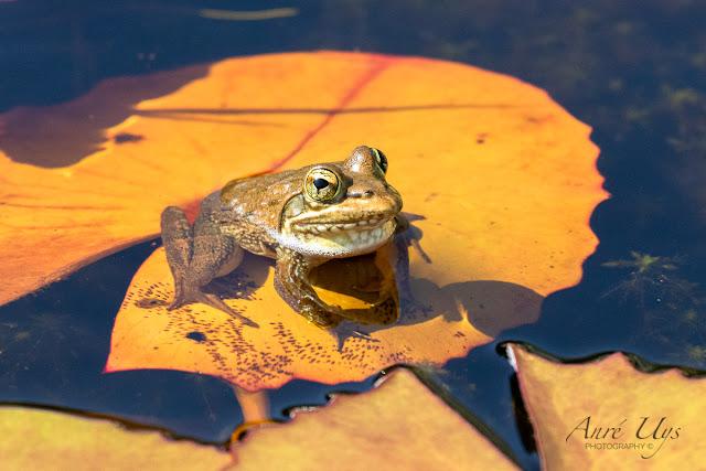 Little frog at Harold Porter Botanical Garden