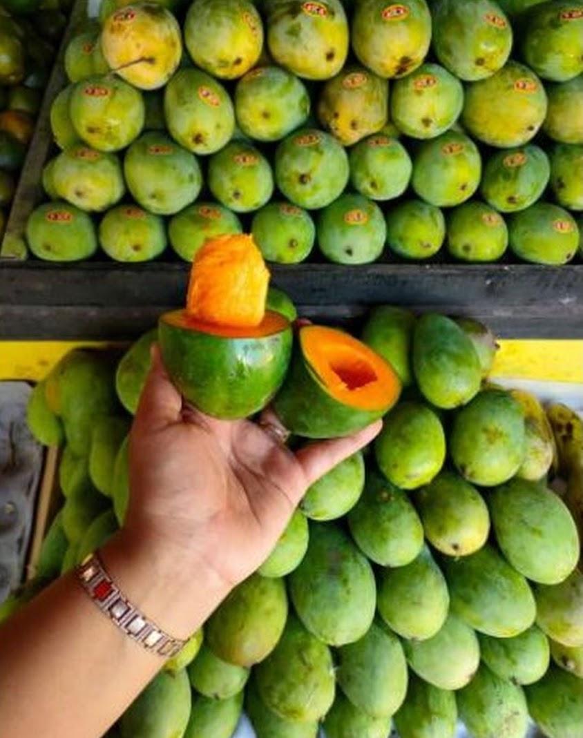 mangga Super mangga alpukat Probolinggo