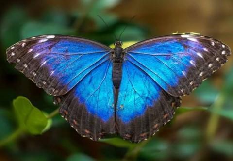 istanbul çocuklarla gezilebilecek yerler kelebek çiftliği
