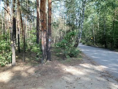 Nasza ścieżka żegna się z pozostałymi szlakami na skraju polany