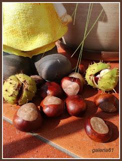 kasztany, jesień
