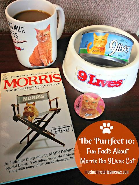 cats, Morris, 9Lives, #shop, #cbias