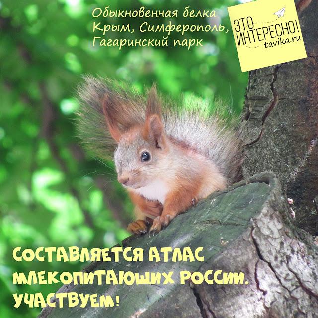 атлас млекопитающих России