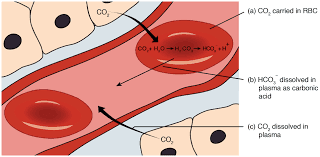 Cashew-Prevents-blood-diseases