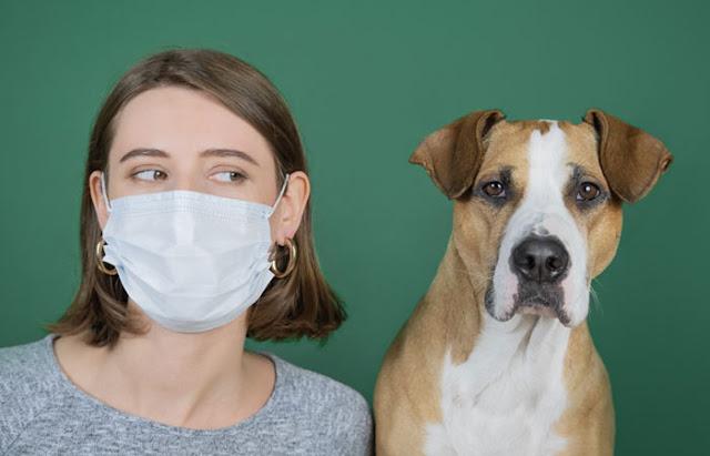 ¿Las mascotas deben guardar confinamiento?-TuParadaDigital