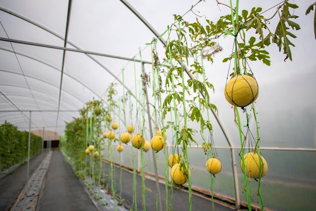 Dubai Food Tech Valley to lead regional agriculture transformation