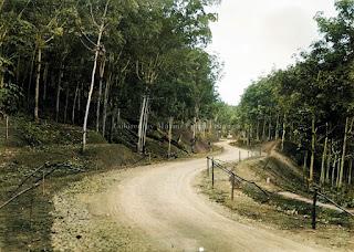 jalan ke perkebunan perusahaan anggoli
