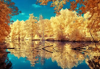 Arboles y bosque en otoño