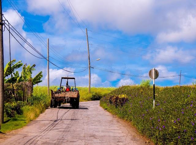 Sugarcane Remains