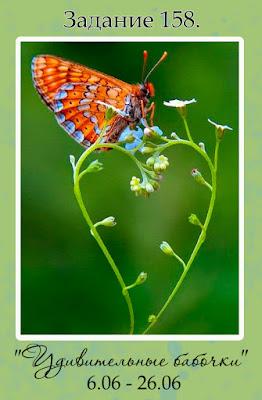 """Задание 158. """"Удивительные бабочки"""""""