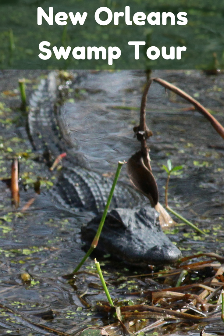 Alligator Hunting On A New Orleans Swamp Tour Travel The