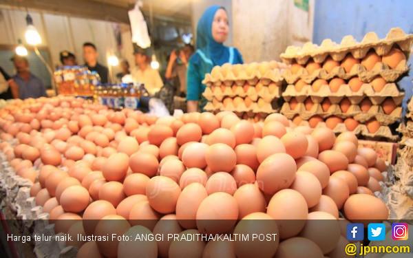 Harga Telur Naik Disebut karena Banyak Warga Hajatan