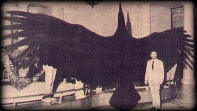 Argentavis-Magnificens-ave-pré-historica-argentina-era-a-maior-ave-que-já-existiu
