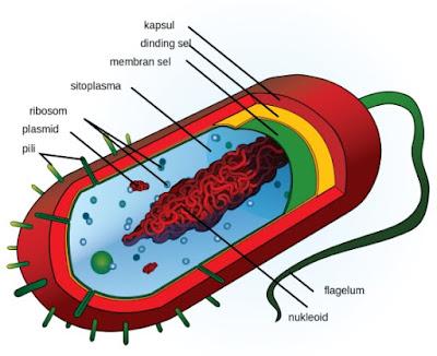 Ilmu yang Mempelajari Sel; Sitologi dan Biologi Sel