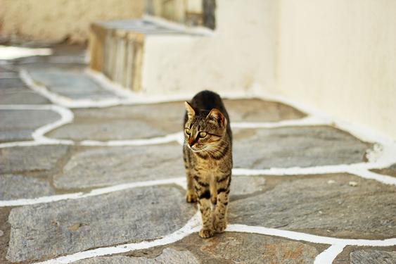 Kissan kulttuurillinen asema: antiikki