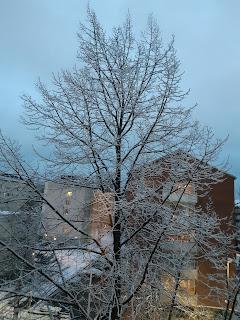 Luminen puu ikkunan edessä, taustalla kerrostaloja ja vähälumista pihaa