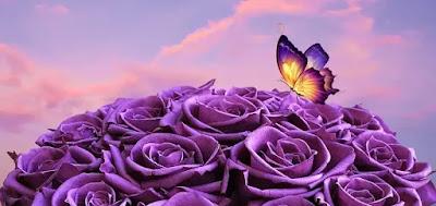 صور ورد بنفسجي مع فراشة جميلة جدا