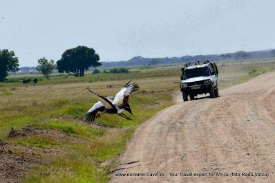 pasare in zbor la nivelul drumului