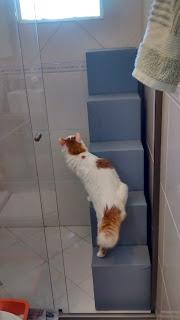 gatos na janela do banheiro