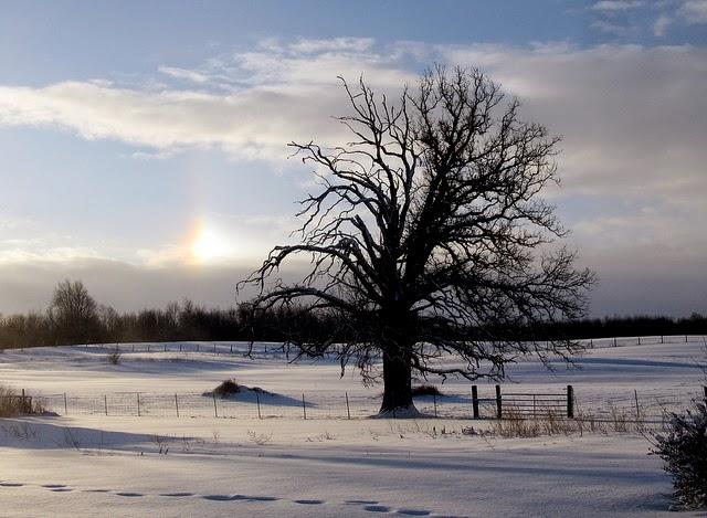 Winter tree per Rachel Kramer a Flickr