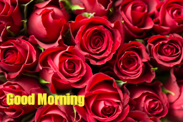 Good morning download red love roses image