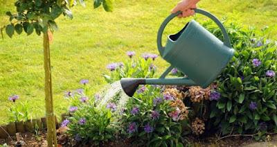 El cuidado de nuestras plantas ayudan a disminuir el estrés