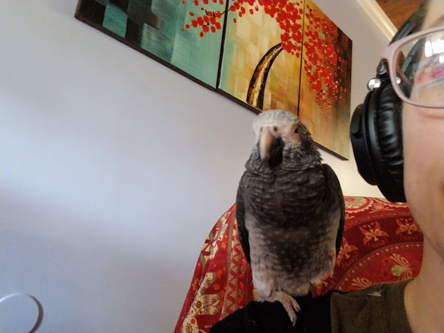 parrot music tv parrot town youtube channel update