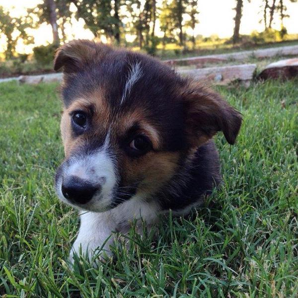 17 khuôn mặt dễ thương của cún cưng khiến bạn muốn nựng yêu ngay lập tức