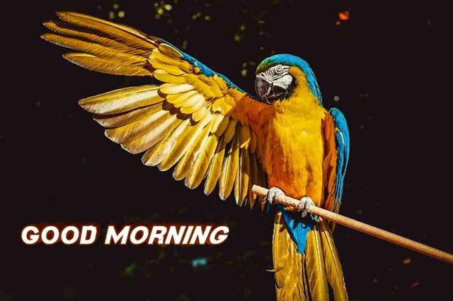 Awesome good morning image with cute parrot