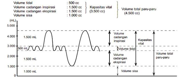 volume pernapasan dan kapasitas paru-paru