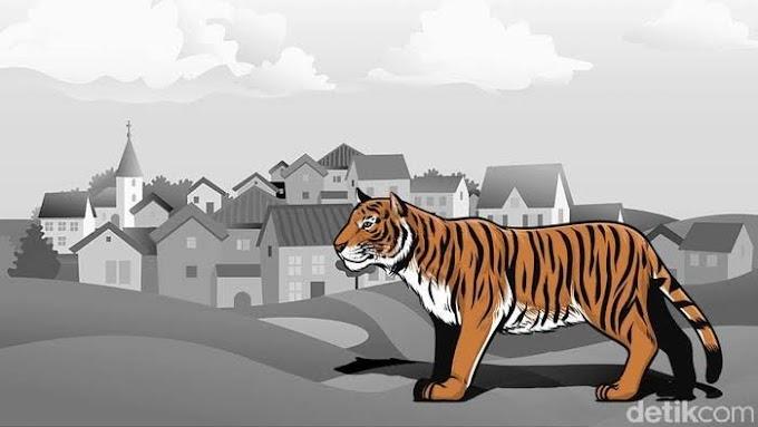 Kisah  Harimau  Masuk Pemukiman  Di Aceh Timur