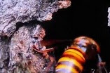 Arıların İnanılmaz Savaşları Video İzle
