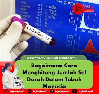 Bagaimana Cara Menghitung Jumlah Sel Darah Dalam Tubuh Manusia