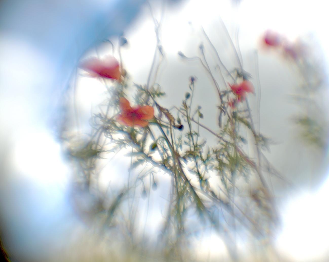 Zum Tagesabschluss -- Kollimator reloaded — Mohnblüten mit verschiedenen Blendenstufen