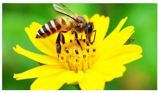 Simbiosis mutualisme lebah dan bunga