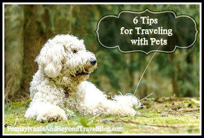 6 Tips for Traveling with Pets