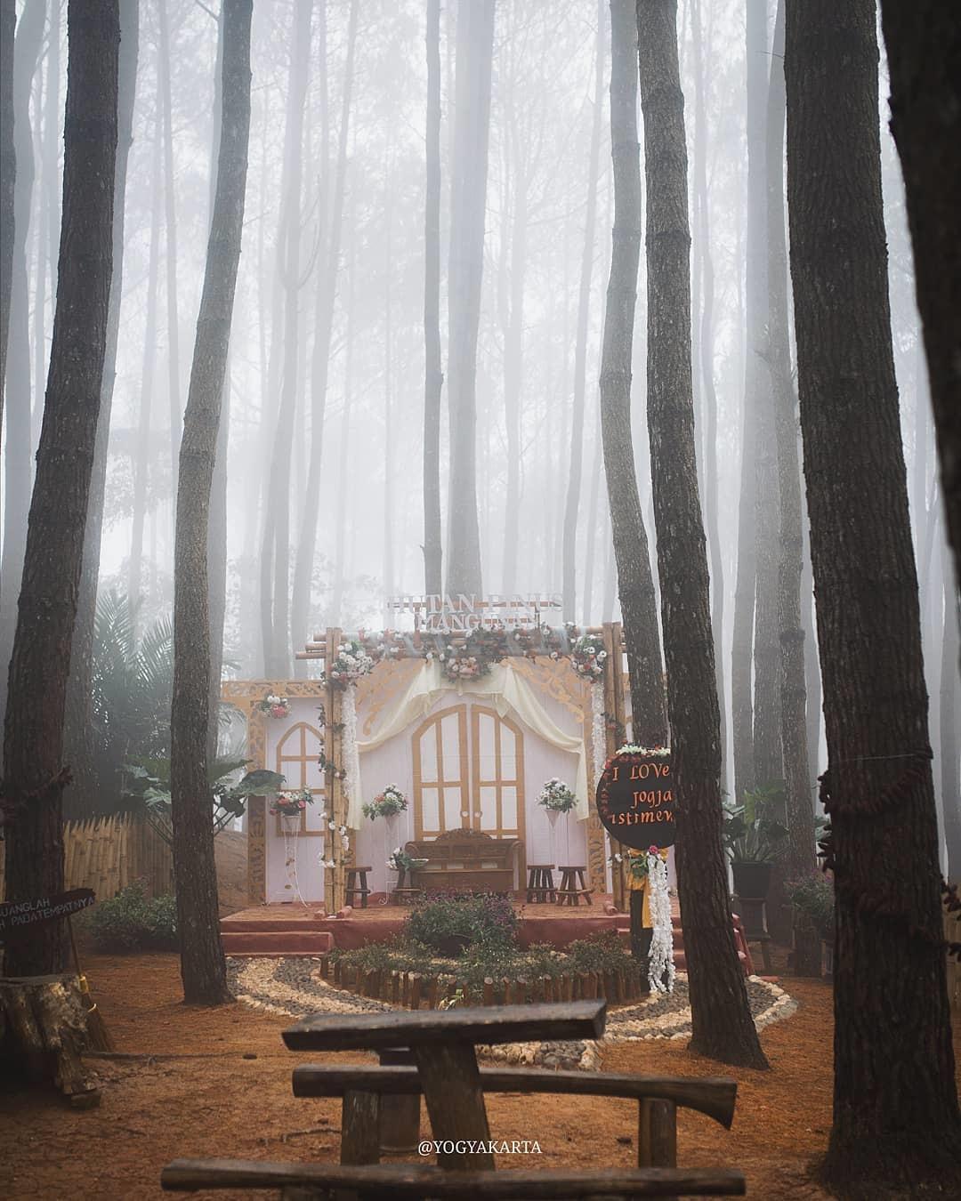 Pengelolaan Hutan Pinus Mangunan