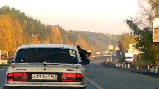 Un oso en su carro viaja sin problemas porque trae cinturón