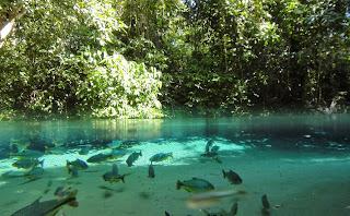 rio com peixes